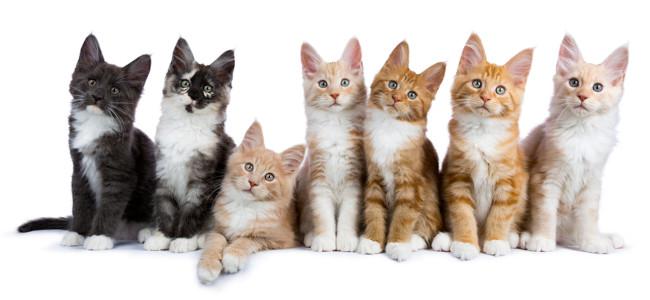 Qualquer substantivo que indique um grupo de seres da mesma espécie é um coletivo.