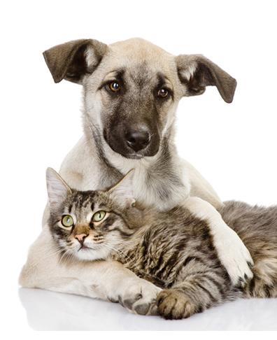 A amizade entre um cachorro e um gato, para muitos, é um paradoxo, já que acostumaram com a antítese presente entre eles: amor e ódio