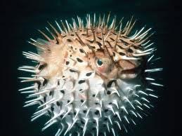 """O vocábulo """"espinho"""" se refere à textura encontrada no corpo do animal"""