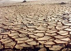 A aridez do sertão nordestino foi uma importante temática do período em evidência